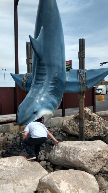 Jaws ripoff